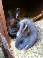 new bunnies