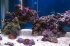 aqua on ar850 (marine)