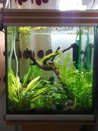 June 2012 - My BN pleccos Co2 planted tank