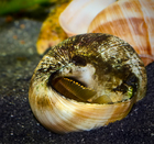 Occie in Shell