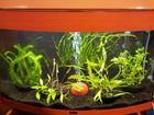 Planted fancy goldfish tank