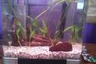 Updated Shrimp Tank
