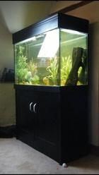 My RBP tank