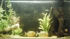RBP tank again :)