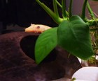 Female Lemon Pic2