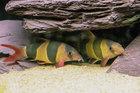 Loach Pile