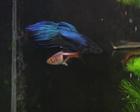 Boy Blue and Friend