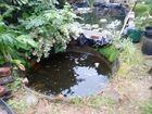 Original Pond 1