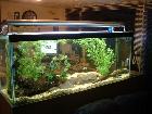 The Claw tank .............Again !!!!!