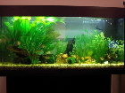 Maggies fishtank