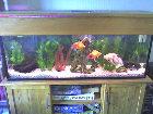 Fishy-Fishy's blurry pics!