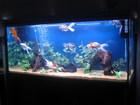Goldy's  Rena Tank