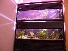 My Tank setup (freshwater)