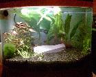 my arranged tank